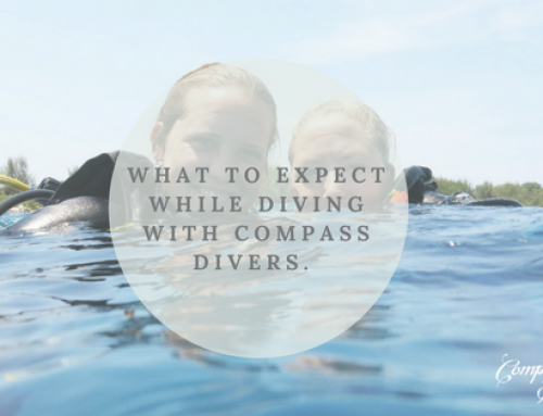 What to expect while diving with Compass Divers.