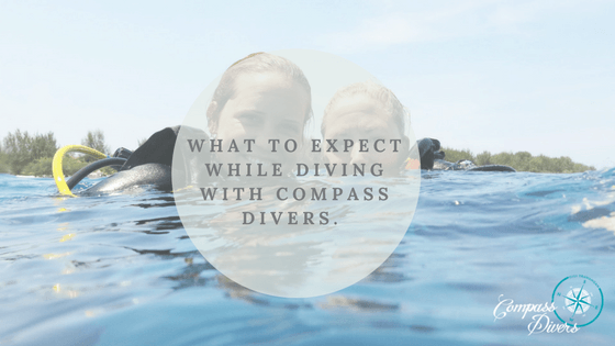 Diving at Compass Divers will be the best thing you ever did.