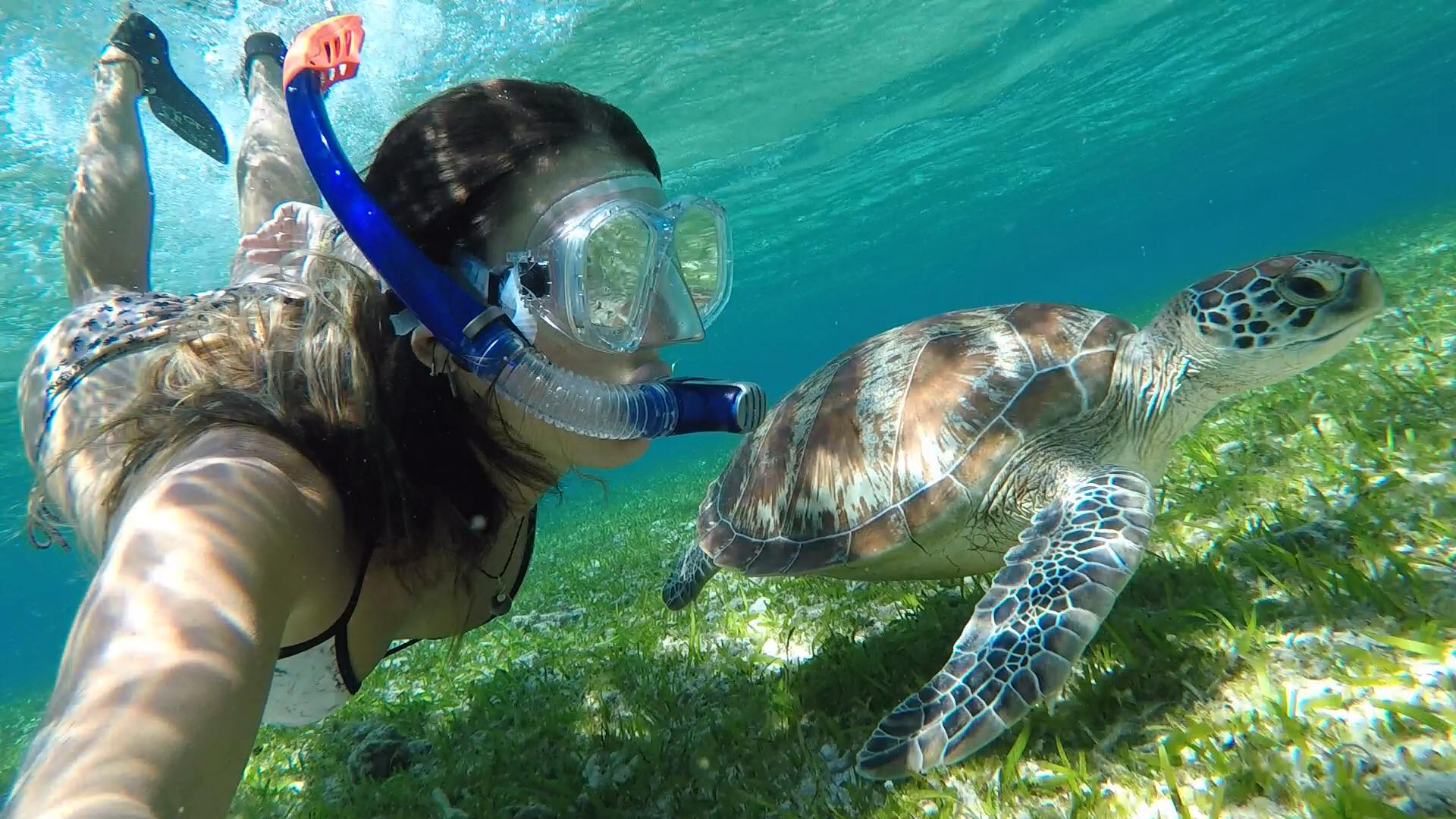 Woman in the sea snorkelling with a turtle.