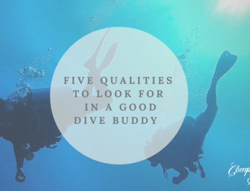 Five qualities to look for in a good dive buddy.